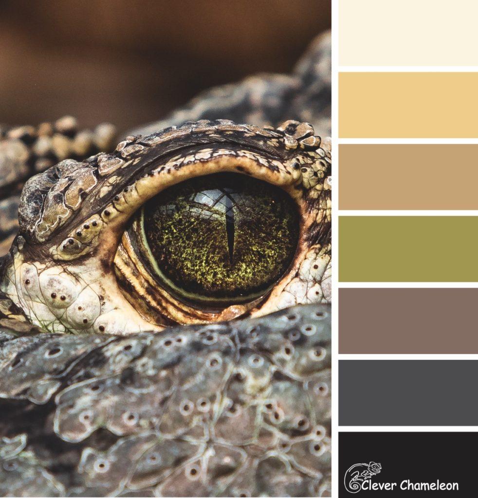 Croc colours